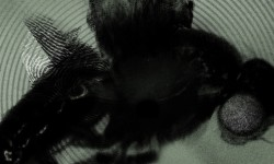 Reel Rewind: 'The Fly'