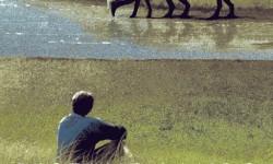 'Distant Lands', A Solo Exhibit By Matt Ferguson