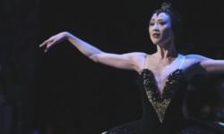 LAFF '15: 'Maiko: Dancing Child'