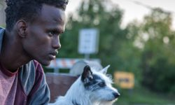 Film Review: 'A Stray'