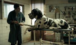 Film Review: 'Dogman'